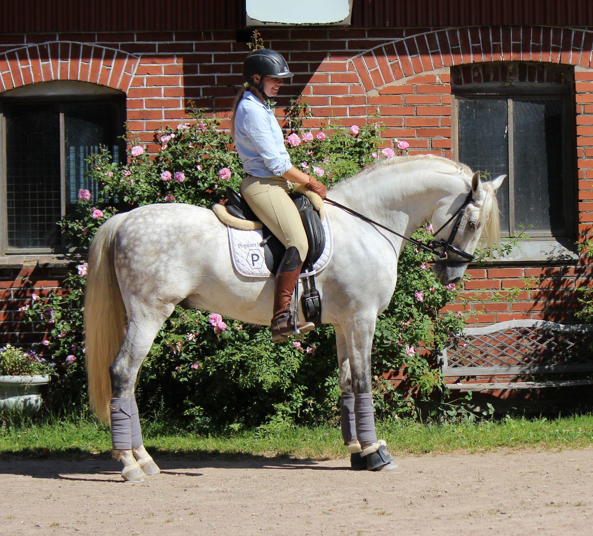 pre häst till salu